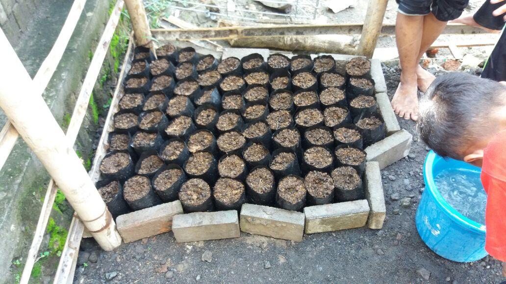membuat tempat menanam bibit sayur